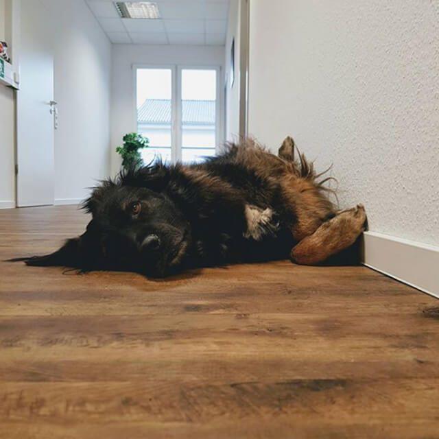 Agentur Hund Leverkusen Artista